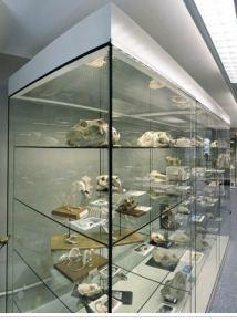 Online Veterinary Anatopmy Museum snip
